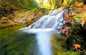 Mountain stream with flowing water and leaves in the fall