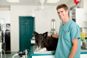 Vet Assistant with dog